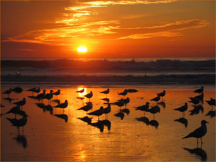 1-oceanfront-sunset